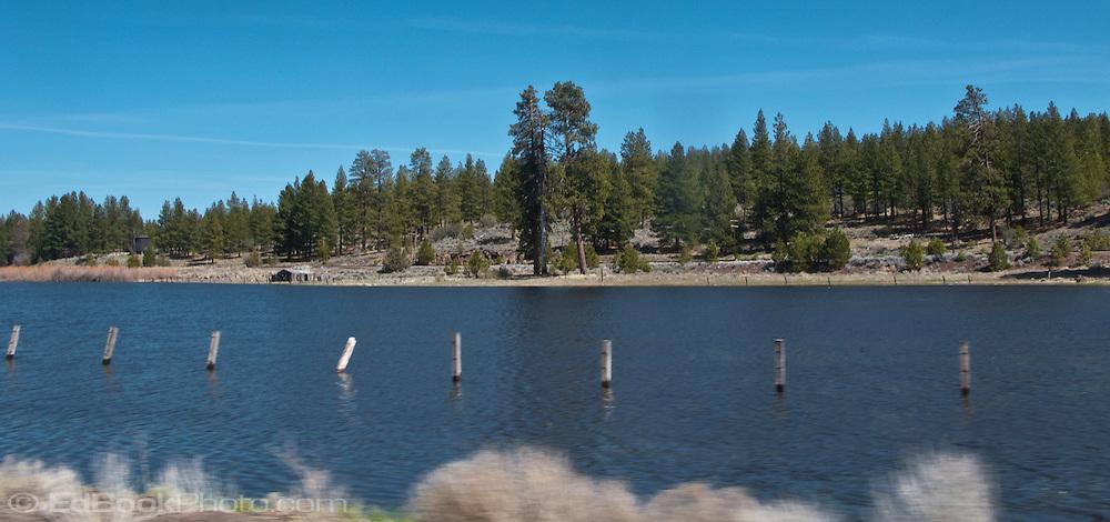 pilings in a millpond near Klamath Falls, Oregon