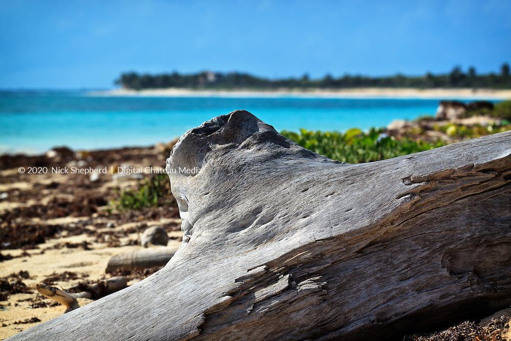 Driftwood on a caribbean beach.