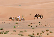 Camel herder and bedouin life in the desert at Al Ain, Abu Dhabi, United Arab Emirates