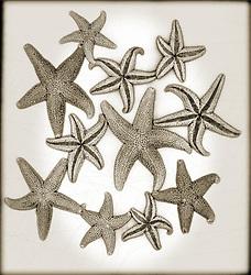 Star fish brown tone