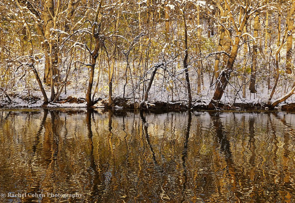 """""""Golden Way""""<br /> Lovely golden hour reflections on the Huron River in winter time!"""