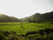 A vietnamese farmer walks through a rice field at sunrise in Tuyen Quang province. Scenery is quite, peacefull with warm and vivid colors. Vietnam, Asia