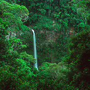 Amber Mountain National Park, a prominent volcanic massif in the north of the country, is the oldest protected area in Madagascar, and is known for its waterfalls and crater lakes, and is one of the most biologically diverse places in all of Madagascar with 75 species of birds, 25 of mammals, 59 species of reptiles, and ???? species of frogs.<br /> Although it is so accessible and supposedly Madagascar's most visited natural attraction I was fortunate enough to be there when it was almost empty. The prominent view sites for the park's waterfalls are really breathtaking. The night walks were very rewarding, especially for an abundance of frog species. The icing on the cake of a very rewarding trip there was discovering a beautiful leaf-tailed gecko on the tree that my hammock was attached to. I discovered it in the middle of the night when I got up to relieve myself. I had trekked far and wide in the hope of finding more of those amazing, elusive creatures and one blessed me with a personal visit in the dead of night.