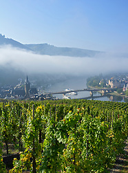 Early morning view of Bernkastel-Kues village from vineyard on River Mosel in Mosel valley in Germany
