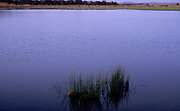 A727XA Flooded meadow field Boyton martshes after winter rain, land below sea level, Suffolk, England