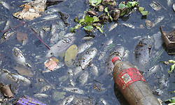 South Africa - Durban - 13 July 2020 - Hundreds of dead fish float on Prospecton river in iSipingo on Monday. It is not yet clear what may have lead to the incident<br /> Picture: Doctor Ngcobo/African News Agency(ANA)