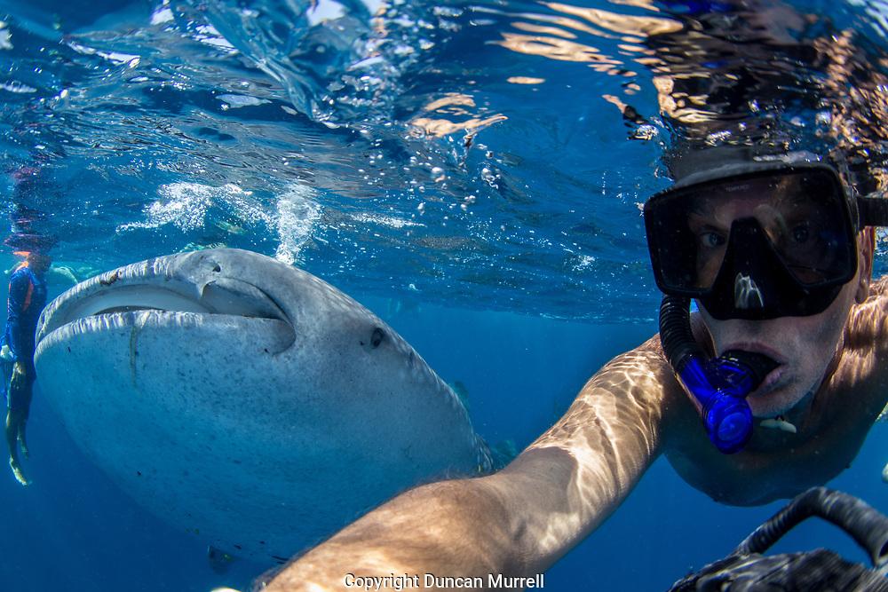 Selfie with whale shark (Rhincodon typus), Honda Bay, Palawan, the Philppines.