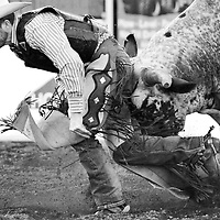 ORIG 06/08/2016 Ryan Brennecke / The Bulletin<br /> <br /> Dustin Jenkins runs into some trouble after falling off his bull during the XTreme Bulls event of the Sisters Rodeo on Wednesday, June 8, 2016.