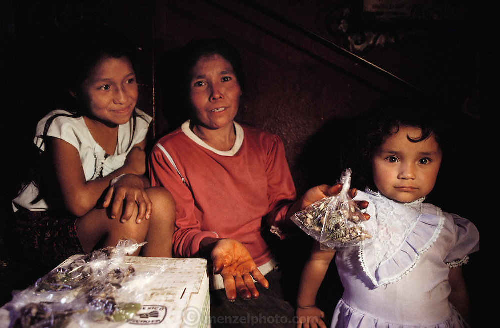 A mother sits with her daughters in the market in Taxco, a colonial silver mining town sixty miles southwest of Mexico City, Mexico. She is selling bags of the edible iodine-rich flying stinkbug, the jumil (Euchistus taxcoensis). The jumil is rich in iodine and consuming them prevents diseases resulting from iodine deficiency like goiters and thyroid problems. Image from the book project Man Eating Bugs: The Art and Science of Eating Insects.