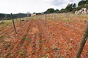 Domaine Mas Champart St Chinian. Languedoc. Terroir soil. The vineyard. France. Europe.