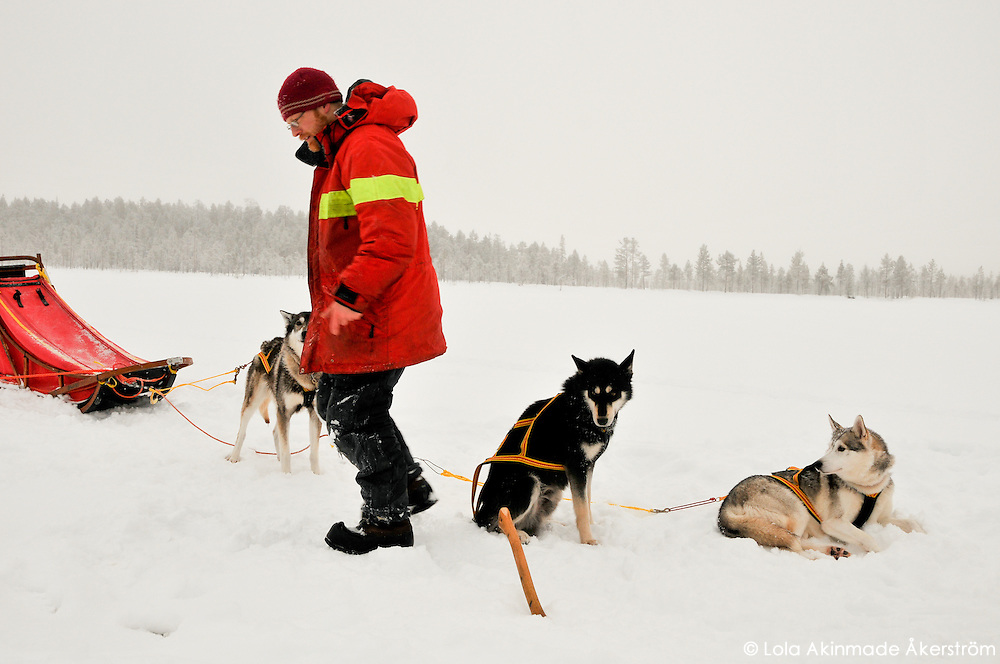 Dog sledding across frozen lakes in Jokkmokk, Swedish Lapland