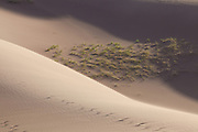 Dune grass and shadows create an interesting scene, Great Sand Dunes National Park and Preserve, Colorado.