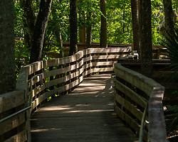The boardwalk leading up to the head of the spring, Blue Springs State Park, Florida. Image taken by Joy Aldridge with a NIKON Z 6_2 and NIKKOR Z 70-200mm f/2.8 VR S Z TC-2.0x at 140mm, ISO 500, f5.6, 1/800.