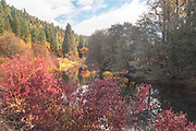 Indian Creek From Cougar Corner, Genesee Valley, California Mountains, Fall Leaves, Autumn Leaf Color, Red Bud, Chokecherry, Dogwood, Alder, Ponderosa Pine, Cottonwoods