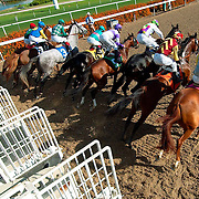 9/24/06 4:53:31 AM --- HORSE RACING SPORTS SHOOTER ACADEMY 002 --- Horse racing at Hollywood Park in Los Angeles on November 2nd, 2006.<br /> Photo by Craig Glover, Sports Shooter Academy