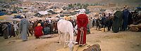 Maroc, Moussem des fiancée à Imilchil // Annual souk of cattle, Berbere market, Moussem of fiancée, Berbere tribe of Aït Hdiddou, Village of Imilchil, Atlas moutain, Morocco