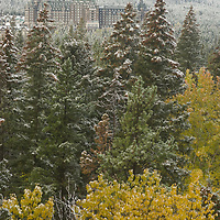 An early snowfall dusts fall colored trees surrounding the Banff Springs Hotel in Alberta , Canada's Banff National Park.