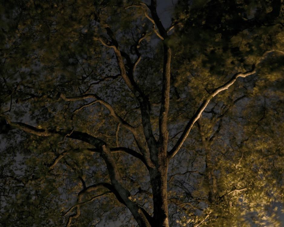 Moving tree at night