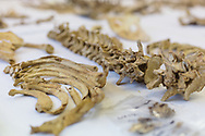 The remains of missing persons that have been excavated by the Committee for Missing Persons (CMP), in their lab for DNA testing, in the hope of finding the identity of the remains and notifying relatives.