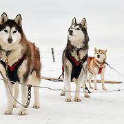 Dog sled training on Col de Béal,