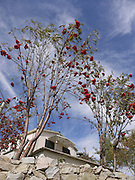 Turkey, Pontic Mountains range, Rowanberry tree (Sorbus aucuparia) AKA Mountain Ash