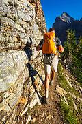 Hiker on the Yukness Ledges Trail above Lake O'hara, Yoho National Park, British Columbia, Canada