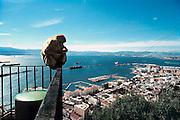 Spanje, Gibraltar, 8-6-2006Een van de wilde apen  kijkt uit over de baai van Gibraltar, met onder zich de stad. Aan de andere kant Spanje en  de stad Algeciras.Britse kroonkolonie. Spanje wil de rots terug.Foto: Flip Franssen