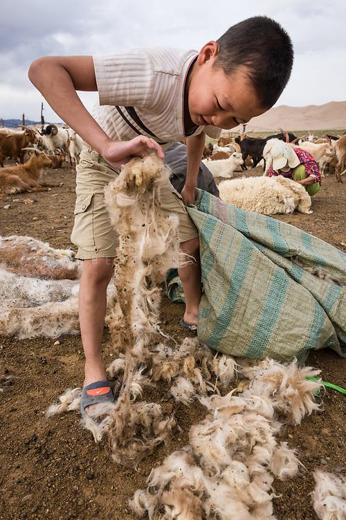 A boy picks up goat wool at a goat sheering session in the Gobi Desert, Mongolia. Photo © Robert van Sluis - www.robertvansluis.com