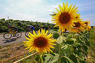 Illustration, Scenery, Sunflowers during the 105th Tour de France 2018, Stage 18, Trie sur Baise - Pau (172 km) on July 26th, 2018 - Photo Kei Tsuji / BettiniPhoto / ProSportsImages / DPPI