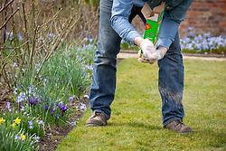 Feeding a lawn with granular lawn feed fertiliser in spring
