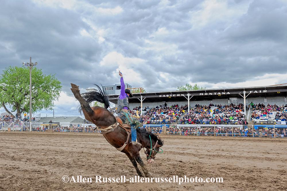 Miles City Bucking Horse Match Bronc, Saddle Bronc, Josh Davison on James Bond, Montana