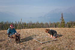 Researchers measuring abundance of plant species in long-term plant removal experiments near Kluane Lake, Yukon