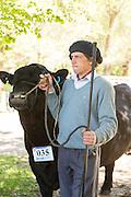 Gaucho displays cattle, Estancia Huechahue, Patagonia, Argentina, South America