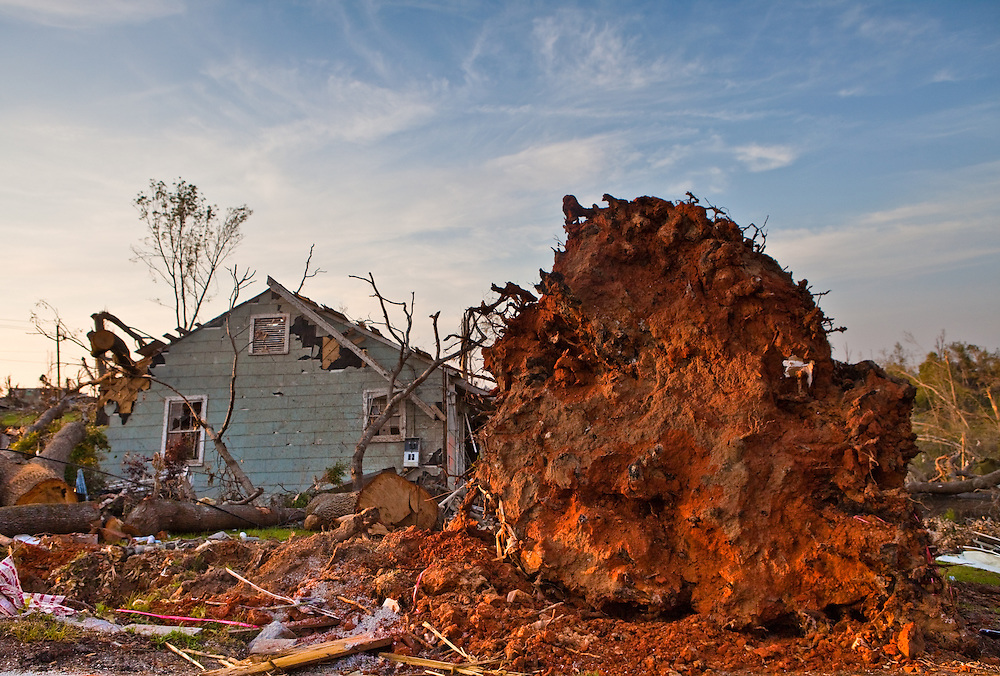 Roots of a tree expsoed after a tornado. Holt, A suburb of Tuscaloosa remains in a state of ruin over two weeks after it was hit by an F-4 ( possibly an F-5) tornado, one of an estimated 300 that struck Alabama and the neighboring states on April 27th , 2011.