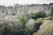 A bit of variation, living and dry bush on dunes, in Mason Bay, The Southern Circuit, Stewart Island / Rakiura, New Zealand Ⓒ Davis Ulands | davisulands.com