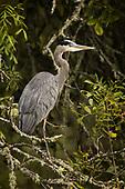 Ridgefield National Wildlife Refuge 10-03-20
