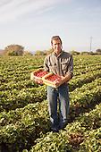 UCSC Organic Strawberries