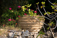 Geraniums growing in a terracotta pot on a stone wall on the Orkos Estate, Paxos, Greece, Europe