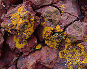 Lichens on volcanic rock in the Calico Mountains, Black Rock Desert, Nevada.