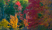 Autumn forest, October, evening light, Cheshire County, New Hampshire, USA