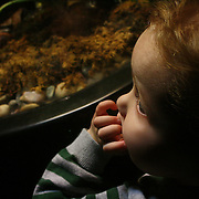 Holly Larue Frizzelle visits the N.C. Aquarium for the first time since being diagnosed with Leukemia. Just a few days before being diagnosed we visited the aquarium and she was so weak she had to be pushed in a stroller.