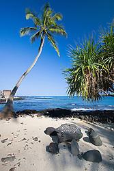 """Konane, an old Hawaiian """"checker"""" game on stone table, Coconut Palm, Cocos nucifera, Pu`uhonua o Honaunau or Place of Refuge National Historical Park, Honaunau, Big Island, Hawaii"""