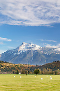 Fresh snow on Mount Cheam (Lhílheqey) as viewed from farmland in Agassiz, British Columbia, Canada.  The white bales of hay on the field are likely the last harvest for the year before winter.