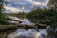 Foster Island, Washington Park Arboretum