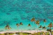 Coconut trees line the shore of Lanikai Beach, Kailua, Oahu, Hawaii