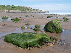 Seaweed on rocks on beach