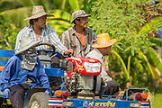 "15 NOVEMBER 2012 - PATHUM THANI, PATHUM THANI, THAILAND: Rice field workers ride to work on a tractor near Pathum Thani. They were going out to harvest rice. The Thai government under Prime Minister Yingluck Shinawatra has launched an expansive price support ""scheme"" for rice farmers. The government is buying rice from farmers and warehousing it until world rice prices increase. Rice farmers, the backbone of rural Thailand, like the plan, but exporters do not because they are afraid Thailand is losing its position as the world's #1 rice exporter to Vietnam, which has significantly improved the quality and quantity of its rice. India is also exporting more and more of its rice. The stockpiling of rice is also leading to a shortage of suitable warehouse space. The Prime Minister and her government face a censure debate and possible no confidence vote later this month that could end the scheme or bring down the government.    PHOTO BY JACK KURTZ"