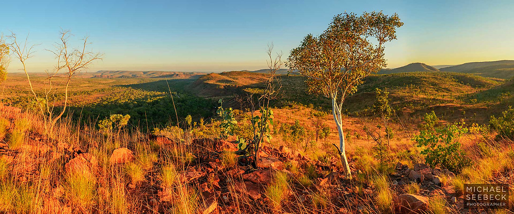 Golden early morning sunlight illuminates a small eucalyptus tree and a wilderness scene in the East Kimberley region of Western Australia.<br /> <br /> Code: CAWK0001<br /> <br /> Limited Edition of 125 Prints