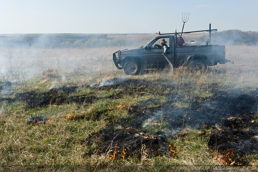 """An unidentified worker from the Flying W Ranch near Clements, Kansas controls the burning of ranch prairie during the """"Flames in the Flint Hills."""" This agritourism event allows ranch guests to take part in lighting the prescribed burns. Prairie grasses in the Kansas Flint Hills are intentionally burned by land mangers and cattle ranchers in the spring to prepare the land for cattle grazing and help maintain a healthy tallgrass prairie ecosystem. The burning is also an effective way of controlling invasive plants and trees. The prairie grassland is burned when the soil is moist but grasses are dry. This allows the deep roots of the grasses to survive and the burned grasses on the soil surface return as nutrients to the soil. These nutrients allow for the rapid growth of new grass. After approximately two weeks of burning, new grass emerges. Less than four percent of the original 140 million acres of tallgrass prairie remains in North America. Most of the remaining tallgrass prairie is in the Flint Hills in Kansas."""