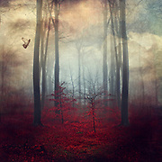 Dreamy forest scenery - red folige, tree silhouette and evening clouds
